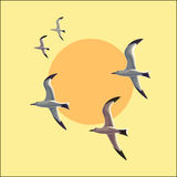 Seagull i flykten mot himlen Royaltyfri Illustrationer