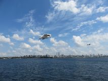 Seagull i flykten på Bosphorus, Istanbul kustlinje i bakgrund royaltyfria bilder