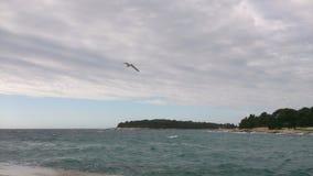 Seagull i jesień Fotografia Royalty Free