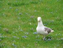Seagull i kwiaty, St Petersburg zdjęcia royalty free