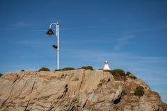 Seagull i lampion zdjęcie stock