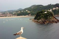 Seagull i mała wyspa w jeden strzale obrazy stock
