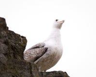 Seagull i romersk sikt royaltyfria foton