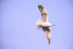 Seagull i sky arkivbild