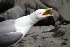 Seagull i skyen Royaltyfria Bilder