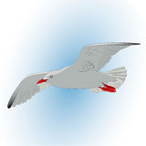Seagull i skyen illustration stock illustrationer