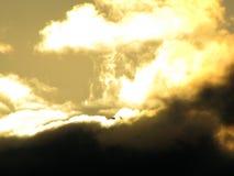 Seagull i solen Fotografering för Bildbyråer