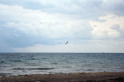 Seagull i stormig himmel Royaltyfri Bild