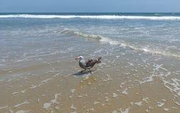 Seagull i stranden Arkivfoto