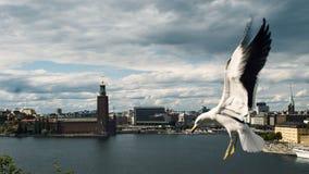 Seagull i Sztokholm zdjęcia stock