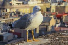 Seagull i taket av domkyrkan arkivfoton