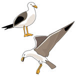 Seagull Illustration Royalty Free Stock Photo