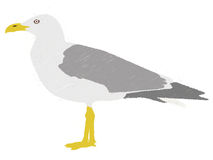 Seagull vector Stock Images