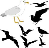 Seagull illustration and silhouettes