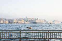 Seagull,Istanbul view Royalty Free Stock Images