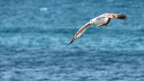 Seagull on its hunt at the sea stock photo