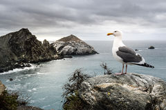 Seagull & Its Kingdom Stock Images