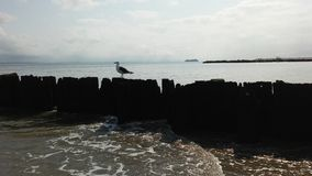 Seagull on Jetty in Atlantic Ocean on Cloudy Day. Stock Photography