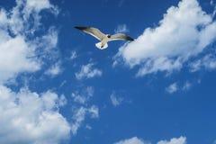 Seagull Jonathan Livenstone Στοκ Εικόνες