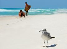 Seagull and Kids Stock Photography