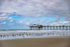 Seagull konwencja molem obraz stock