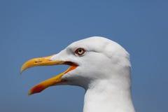 Seagull in La Coruña Royalty Free Stock Image