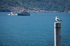 Seagull On Lake Como, Italy Stock Photo