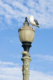 Seagull on a lamp Royalty Free Stock Photography