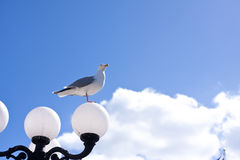 Seagull on lamp Royalty Free Stock Images