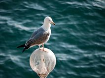 Seagull on lamp - sea background Stock Images