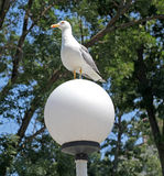 Seagull on lamp Stock Photo