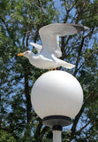 Seagull on lamp Stock Photos