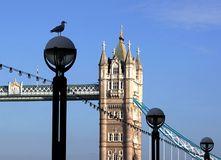 Seagull On Lamppost, Tower Bridge, London, England Royalty Free Stock Images