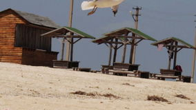 Seagull landing on the beach, then soars into the stock footage
