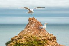 Seagull landing on islet Royalty Free Stock Photo