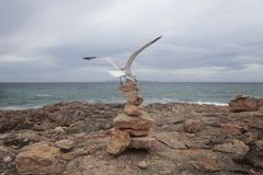 Seagull landing over stone mounds in the south coast of the island of majorca Royalty Free Stock Photos