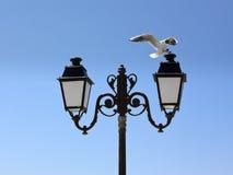 Seagull landing on street lantern Stock Image