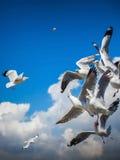 Seagull lata Obrazy Royalty Free