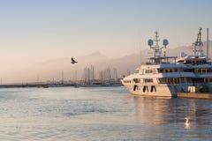 Seagull lata nad morzem w porcie zdjęcia royalty free