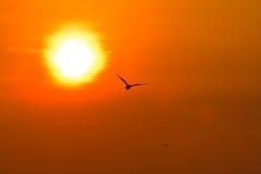 Seagull latanie Obrazy Royalty Free