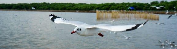Seagull latanie w niebie jako tło przy Bangpoo obraz stock
