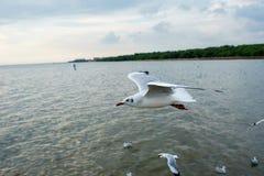 Seagull latanie w niebie jako tło przy Bangpoo obrazy stock