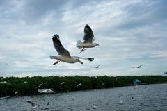 Seagull latanie w niebie jako tło przy Bangpoo zdjęcie royalty free