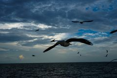 Seagull latanie w niebie jako tło przy Bangpoo fotografia royalty free