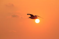 Seagull latanie w niebie z zmierzchem Zdjęcia Stock