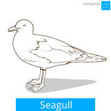 Seagull learn birds coloring book vector Stock Photos
