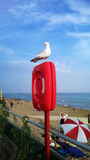 Seagull on life buoy Royalty Free Stock Photo