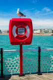 Seagull on a lifebuoy Royalty Free Stock Photo