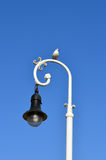 Seagull on light pole. With clear blue sky Stock Image
