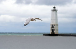 Seagull and Lighthouse background Royalty Free Stock Photo